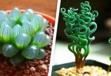 The 11 strangest plants in the world. Like If you love nature