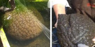 Scientists and Locals Are Baffled by These Brain-Like Creatures Spreading in Fresh Bodies of Water