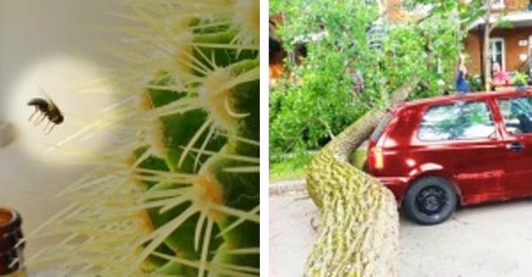 19 Unexpected Things That People Caught on Camera